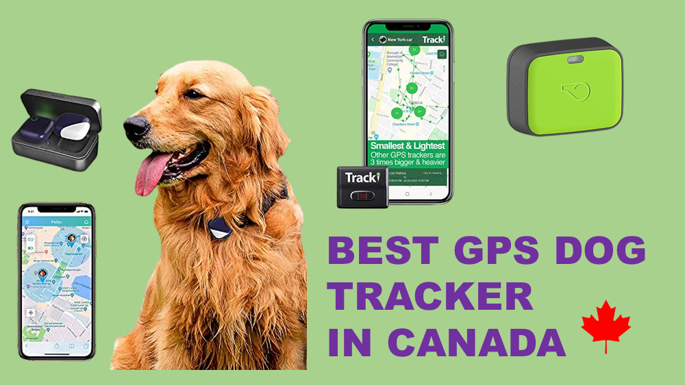 Best GPS Dog Trackers in Canada